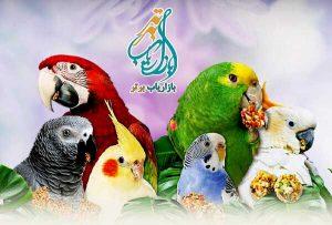 پرورش پرندگان زینتی در خانه